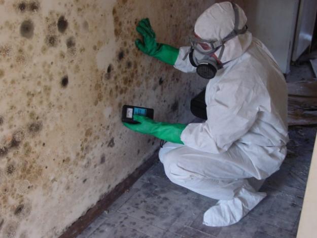 Mold Remediation PA